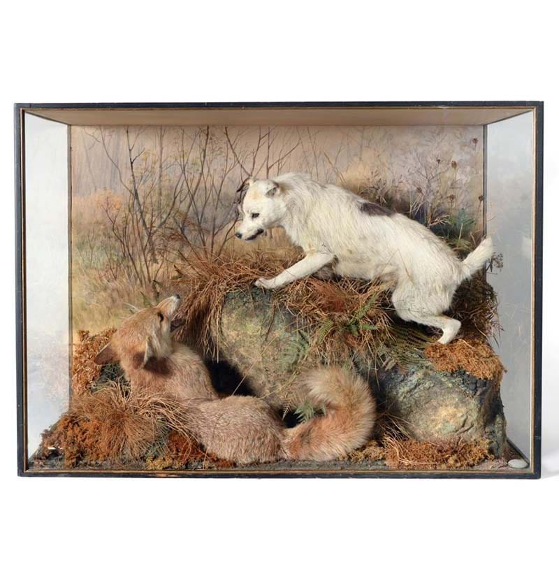 A Rare Diorama Cased Fox Terrier and Fox, by Peter Spicer, c.1900