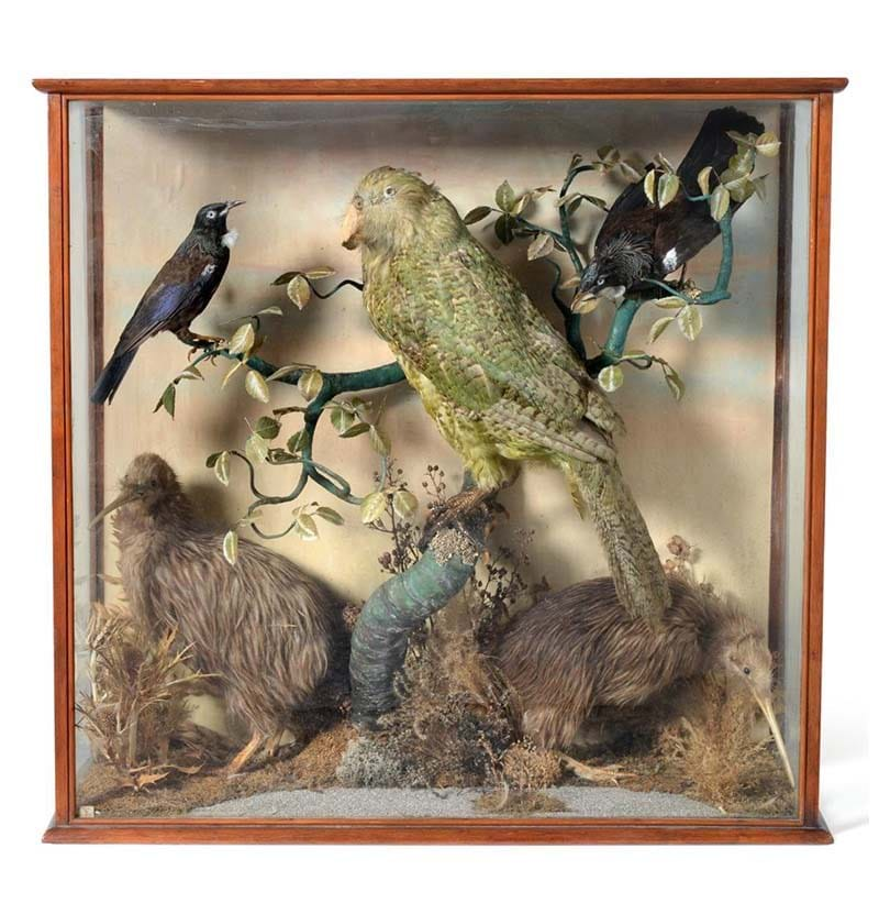An Extremely Important Taxidermy Case of Rare New Zealand Birds, c.1862-1909