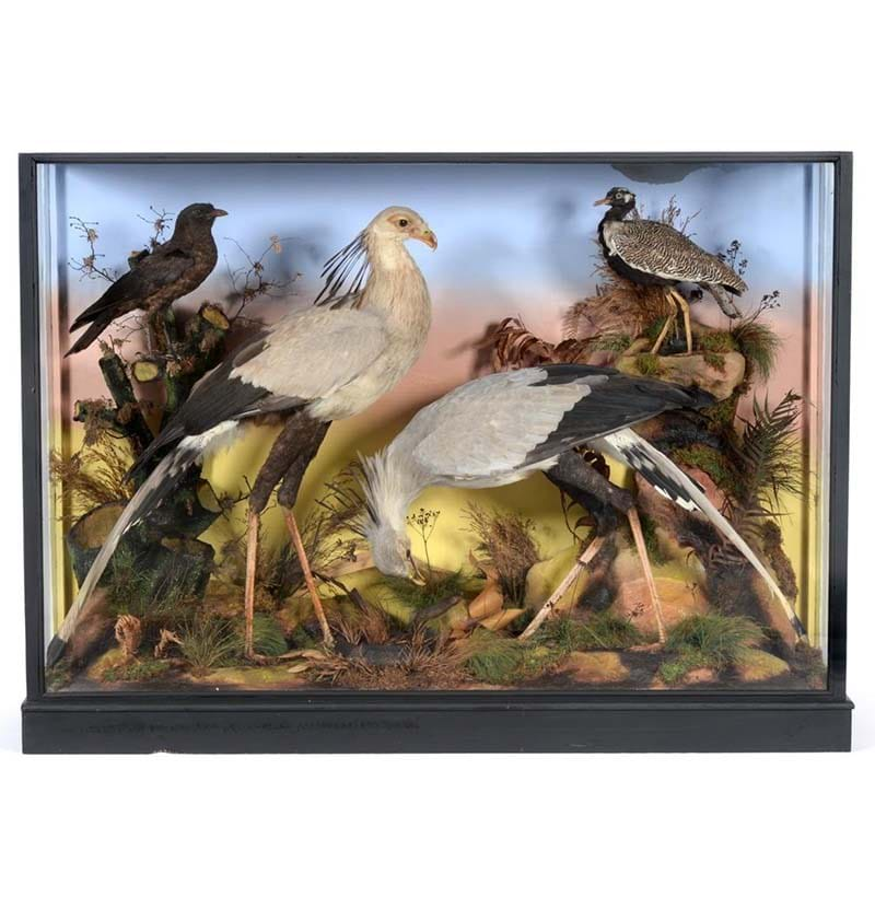 A Rare Large Cased Diorama of Birds Endemic to Africa, circa 1865-1880, by Ashmead & Co, Naturalists, 35, Bishopsgate
