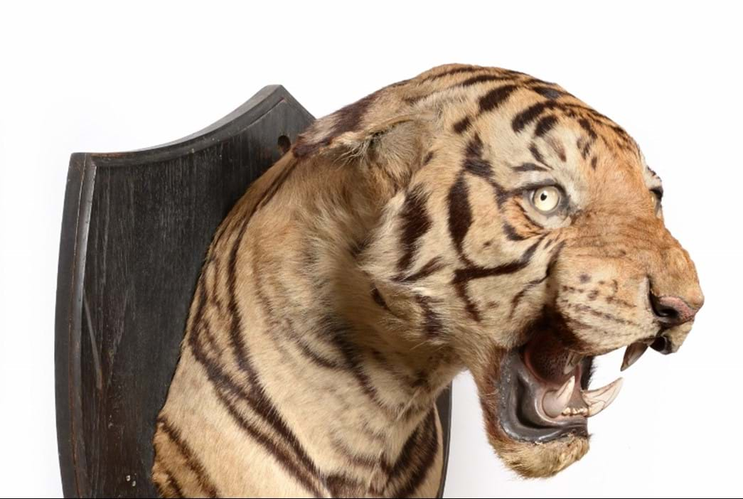 Natural History & Taxidermy Sale Results | Tennants Auctioneers